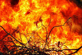Flames in forest fires — Stock Photo