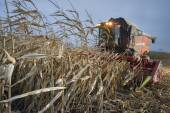 Tractor harvests corn on the field — Stock Photo