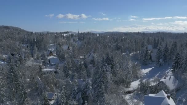 Holiday chalets among snow-covered trees — Vidéo