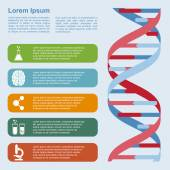 DNA infographic — Stock Vector
