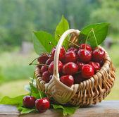 čerstvé třešně — Stock fotografie