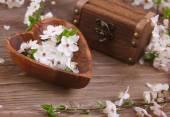 Beautiful flowers cherry — Stock Photo