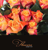 Card with orange roses — Stock Photo
