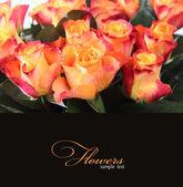 オレンジ色のバラ — ストック写真