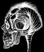 Human skull vintage illustration — Stock Vector