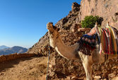 Egypt, Sinai, Mount Moses. Road on which pilgrims climb the mountain of Moses and single camel on the road. — Stock Photo