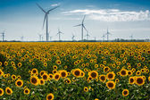 Field with sunflowers and eco power, wind turbines — Stock Photo