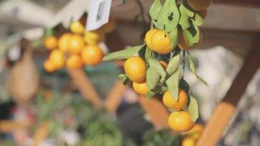 Mandarinky — Stock video