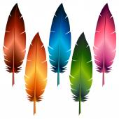 Colorful feathers — Stock Vector