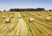 Summer field, grain harvest — Stock Photo