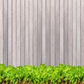 Ciemne drewno tekstura tło Drewno okrągłe panelu i zielonych roślin — Zdjęcie stockowe
