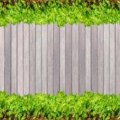 暗い木目テクスチャ背景板パネル木材や緑の植物 — ストック写真