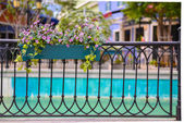 Flower in potted on fence — Stockfoto