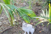 White cat fight green snake in untidy dirty garden, danger — Stock Photo