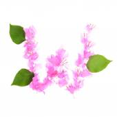 Bougainvillea flowers alphabet isolated on white background — Stock Photo