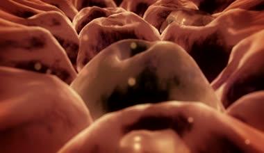 Virus, cells — Stock Video
