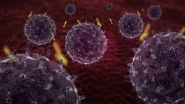 Lymphocytes and antibodies — Vídeo stock