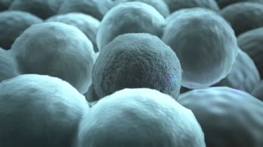 Cells, Cell division — Stock Video