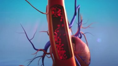Blood vessels, erythrocyte — Stock Video