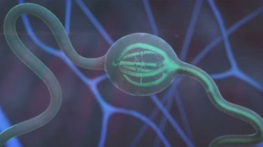 Neuron, nerve cell — Stock Video