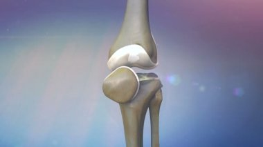 Human knee, knee — Stock Video