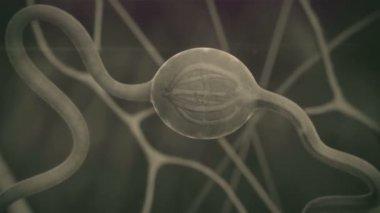 Neuron — Stock Video