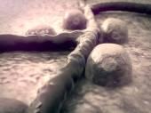 Beta cells, vein — Stock Photo