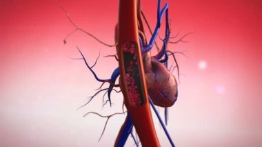 Blood vessels — Stock Video