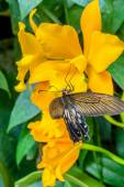 Orchids and butterfly — Stock Photo