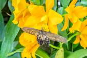 Butterfly on the orchid flower — Stock Photo