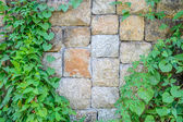 Green leaf with stone wall — ストック写真