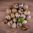 Spotted Quail eggs with one green egg on wooden background — Stock Photo #67605633