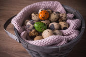 Quail eggs  in a basket and  one orange , green egg with pink knit — Stock Photo