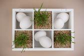 Paskalya bahar dekorasyon çim ve beyaz yumurta ile — Stok fotoğraf
