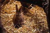 ふわふわウサギに横たわって、ソフトの干し草 — ストック写真