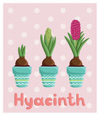 Hyacinths in pots — Stock Vector