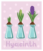 Hyacinths in vases — Stock Vector