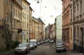 Birds on the streets of Lviv — Stockfoto