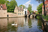 Swans on the river in Bruges — Stock Photo