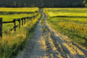 Country road,green trees and sun. — Stock Photo