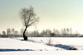 Frosty winter tree illuminated by the rising sun. — Zdjęcie stockowe