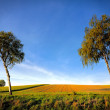 Spring field wit lone tree — Stock Photo #59338181