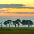 Spring field wit lone tree and sunset — Stock Photo #59531945