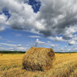 Rolls of hay on the field after harvest — Stock Photo #59538905