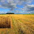 Rolls of hay on the field after harvest — Stock Photo #59539011
