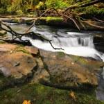 Mountain stream — Stock Photo #60754971