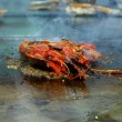 King Prawns on the Grill — Stock Photo #59186145