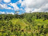 Ubud, Bali — Stock Photo