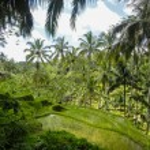 Ubud, Bali — Stok fotoğraf #61916805