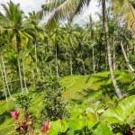 Ubud, Bali — Stok fotoğraf #62608203